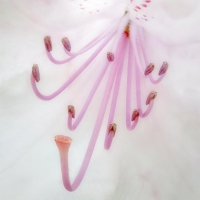 David-Eaves-Rhododendron_Stamens