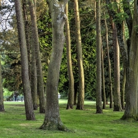 Trees in Brueton Park