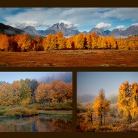 Bob Breach - Teton autumn (projected panel)
