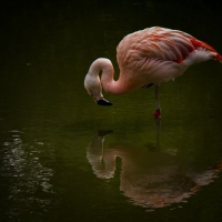 The winning colour image was 'Reflection' by Steve Crampton