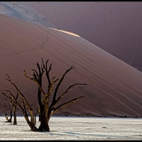 Deadvlei-at-dawn-Tony-Moir.-Landscape