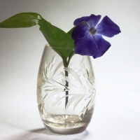 Richard-22673-Greater-periwinkle