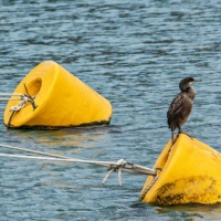 3-Harbour-Buoys-by-Dave-Venables