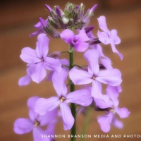 7-Violet-Plant-By-Shannon-Branson