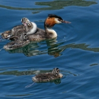 Water-Babies-by-Jim-Mitchell